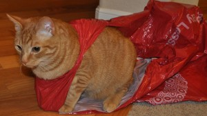 Butterscotch in Shopping Bag