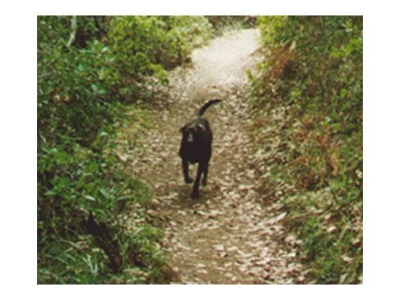 Nano Running on Mt. Tam Trail