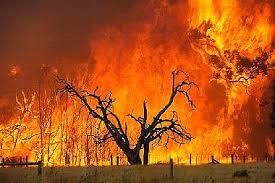 Black Saturday Bushfires 2009 Victoria Australia Fire Scene