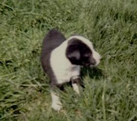 Yurochka Standing in Grass
