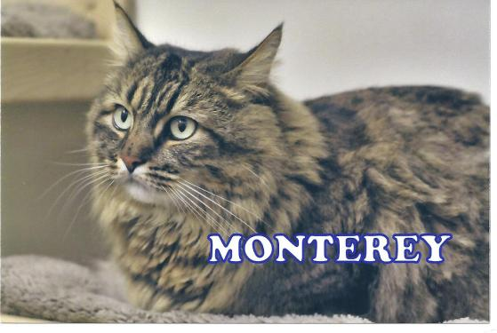 McDuffy nee Monterey Marin Humane Society Photo
